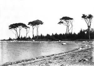 Oak Island Shoreline